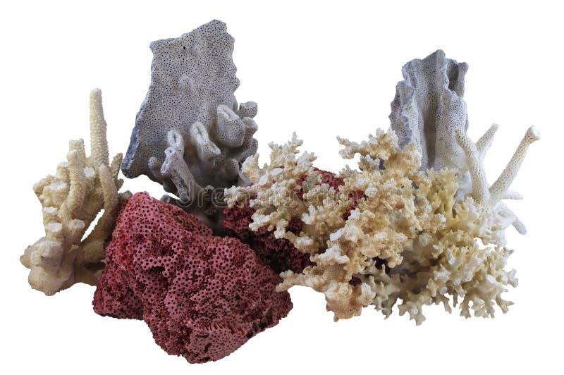 Il corallo Assorted ha isolato fotografia stock