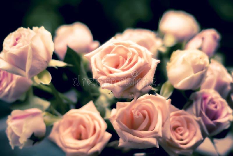 Il corallo ? aumentato mazzo di rosa Rose rosa come fondo Idea delle nozze del biglietto di S. Valentino Fondo romantico di conce fotografie stock libere da diritti
