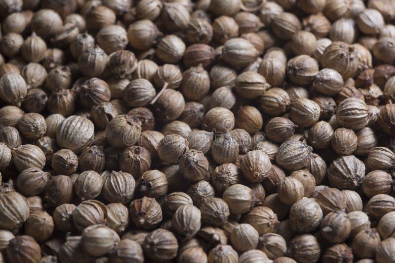 Il coriandolo del condimento aromatizza il coriandre del grano del coriandolo del condimento immagine stock libera da diritti