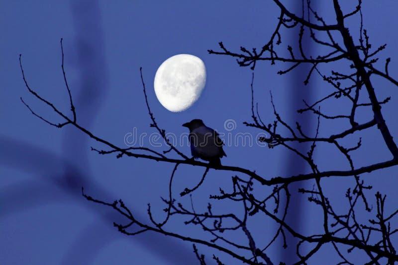 Il corvo e la luna fotografia stock libera da diritti