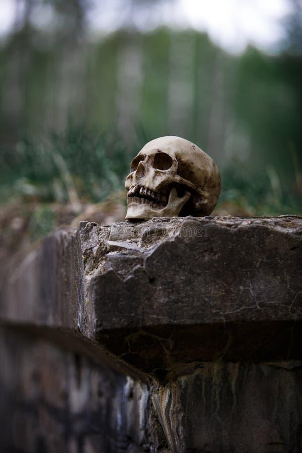 Il cranio di un uomo nel primo piano dell'erba asciutta fotografia stock