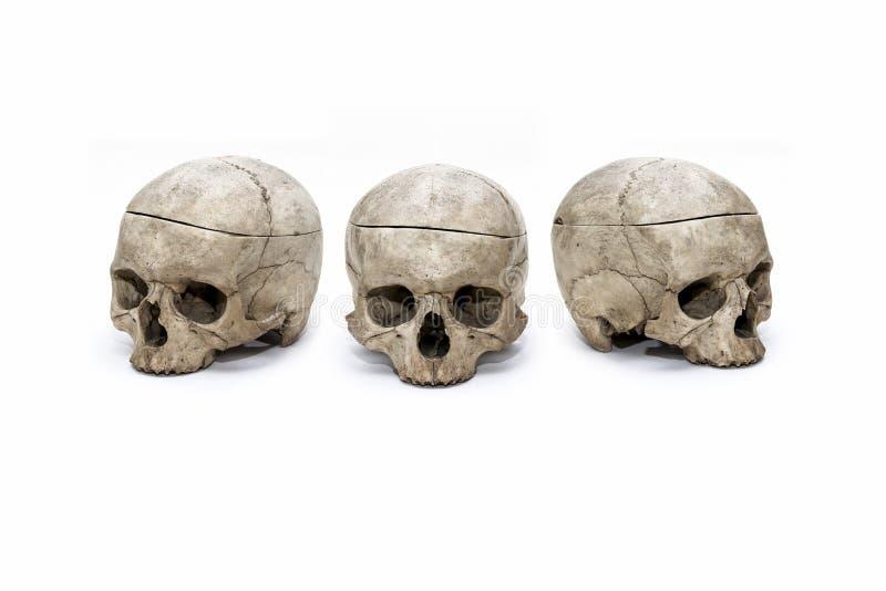 Il cranio umano ha tre posizioni sui precedenti bianchi immagine stock