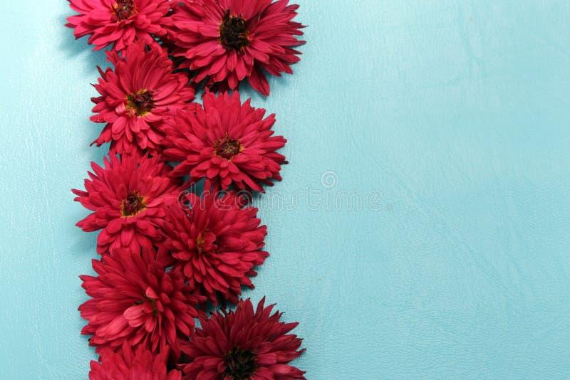 Il crisantemo fiorisce, meravigliosamente sistemato su una superficie blu in una fila fotografia stock libera da diritti