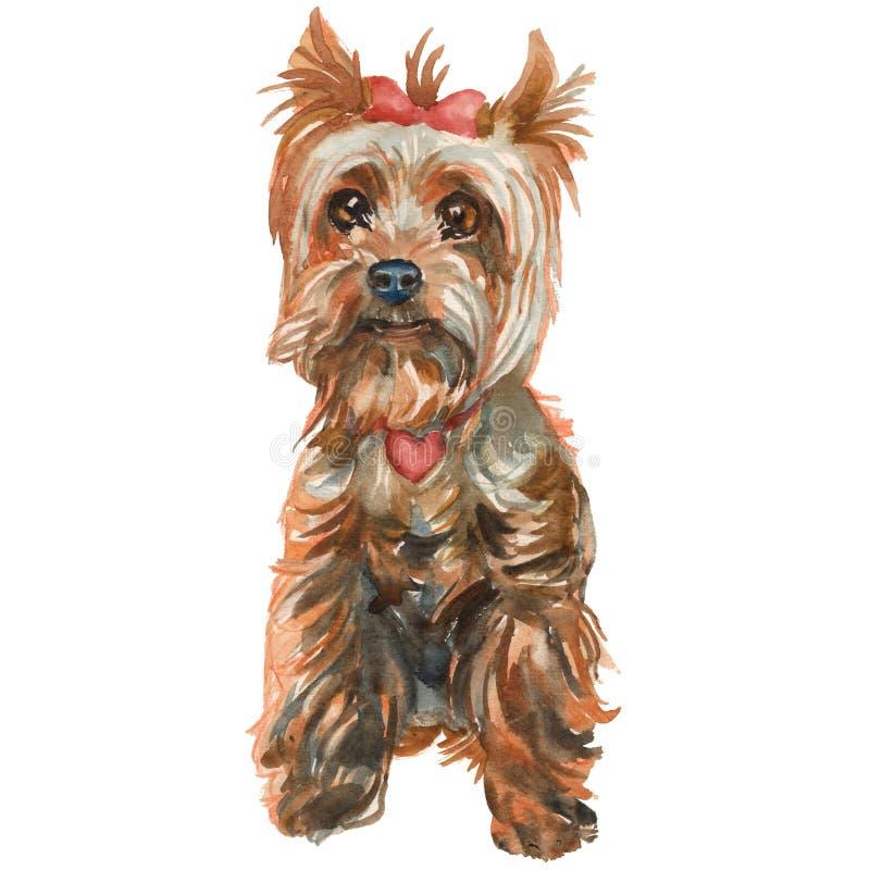 Il cucciolo dell'Yorkshire terrier - ragazza illustrazione vettoriale