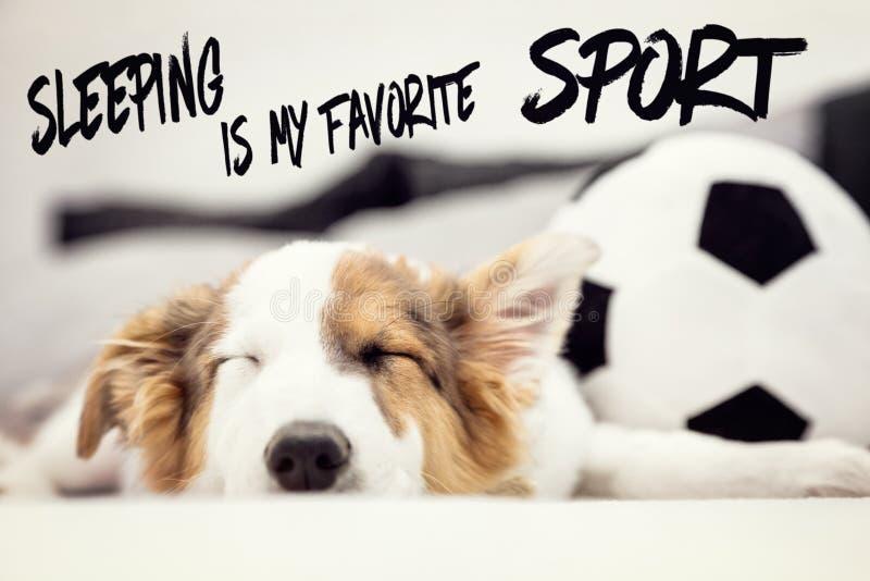 Il cucciolo di cane sveglio e un pallone da calcio, sonno inglese del testo è il mio sport favorito immagini stock
