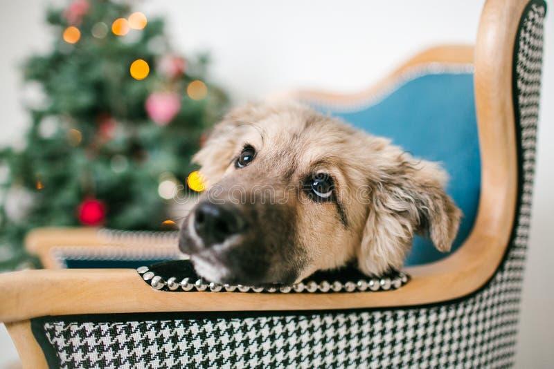 Il cucciolo di cane sveglio vicino ha decorato l'albero di Natale in studio immagini stock libere da diritti