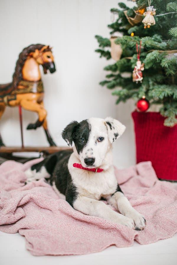 Il cucciolo di cane sveglio vicino ha decorato l'albero di Natale in studio immagine stock