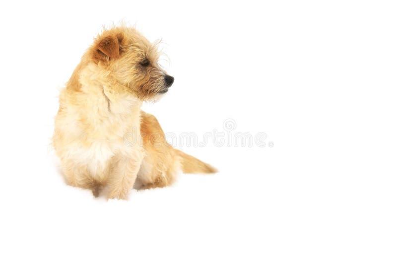 Il cucciolo su neve bianca/è il mio biglietto di S. Valentino fotografia stock libera da diritti
