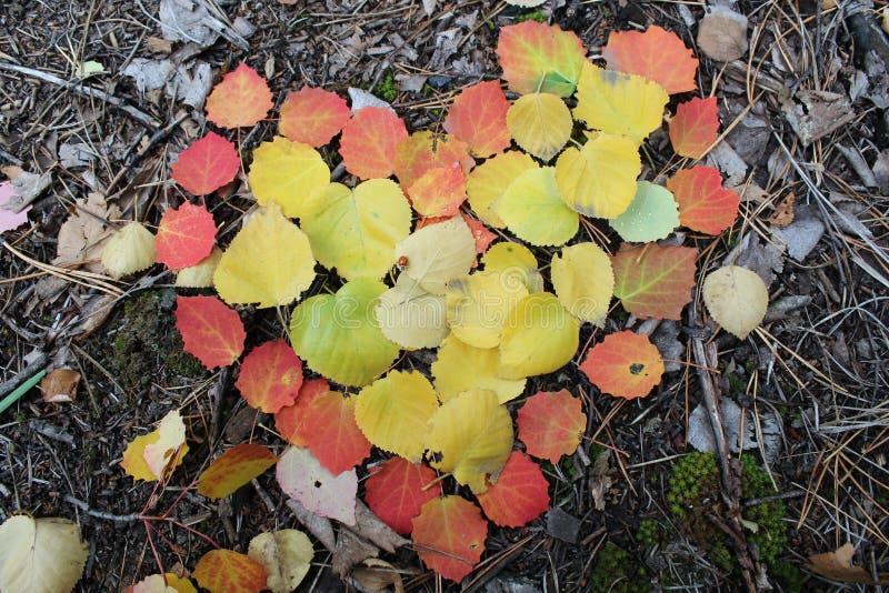 Il cuore dell'autunno, tutto ha suoi svantaggi fotografia stock libera da diritti
