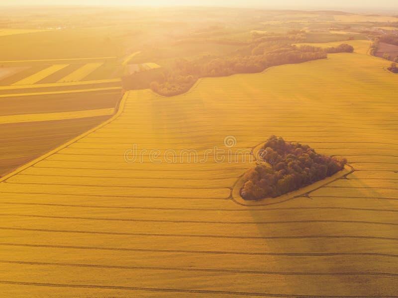 Il cuore di una natura, vista aerea di cuore ha modellato la foresta fra il giacimento giallo della colza all'alba fotografia stock