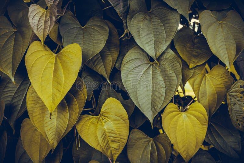 Il cuore lascia il giallo o l'oro lascia il fondo della natura immagini stock