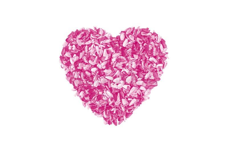 Il cuore rosa delle bucce dai semi di girasole su un bianco ha isolato il fondo l'immagine creativa di amore Giorno del `s del bi immagine stock