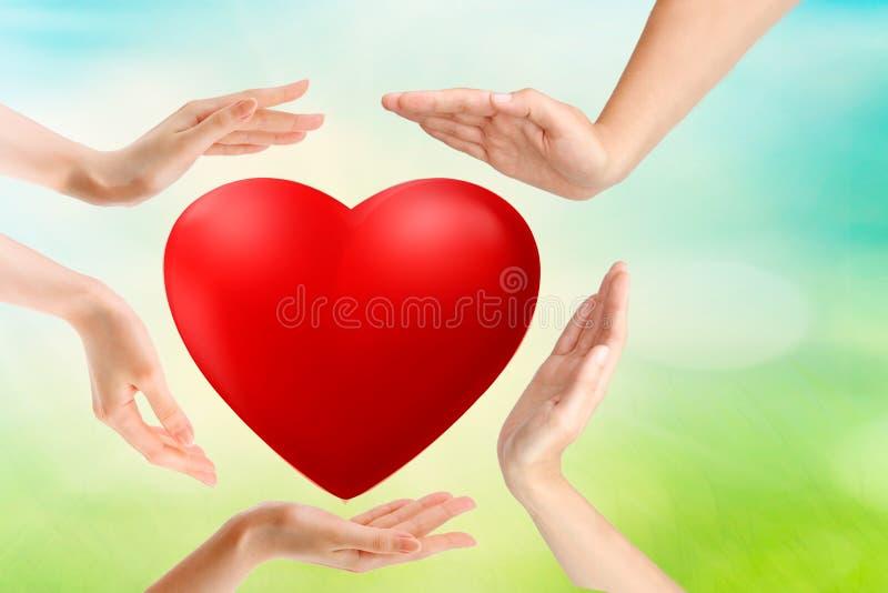 Il cuore rosso in bambino ed in femmina consegna il fondo di legno, spazio della copia Concetto di gentilezza, della famiglia, di immagini stock libere da diritti