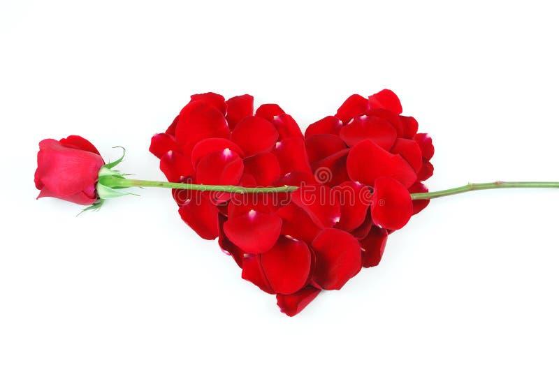 Il cuore rosso dei petali di Rosa con è aumentato come freccia fotografia stock
