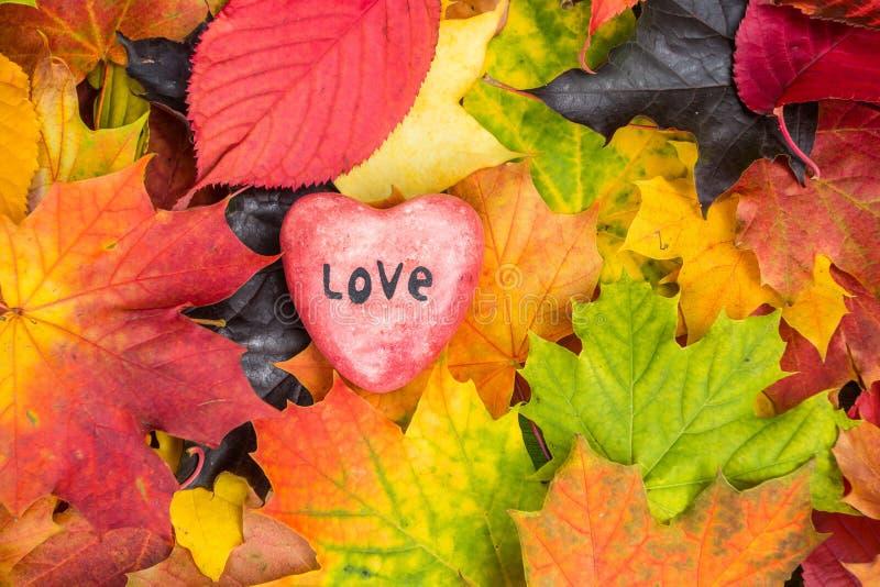 Il cuore rosso sulla caduta mista delle foglie di acero colora il fondo immagini stock