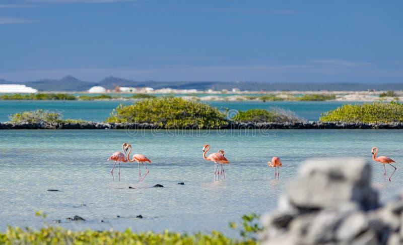 Il cuore si è formato da due fenicotteri negli appartamenti del sale nel Bonaire Antille olandesi immagini stock libere da diritti