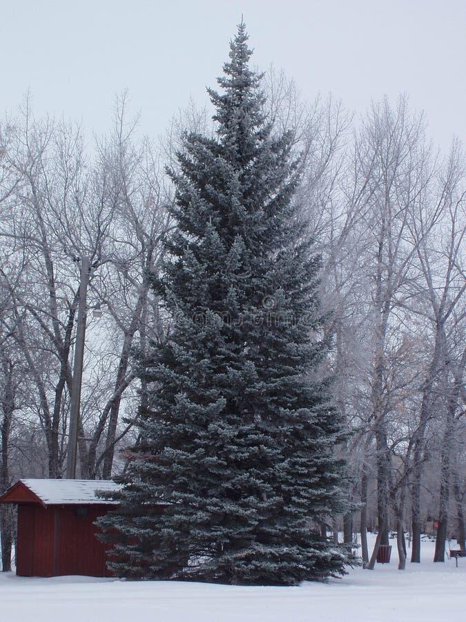 Il Dakota del Nord Snowscene immagini stock libere da diritti
