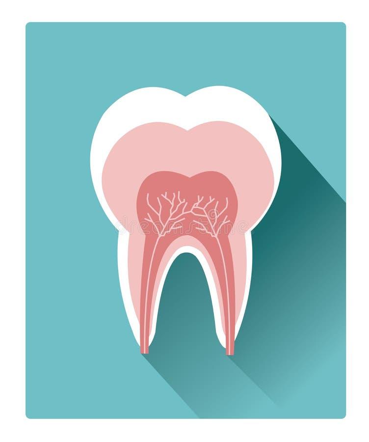 Il dente piano moderno ha dettagliato l'icona dell'anatomia con effetto ombra lungo illustrazione vettoriale