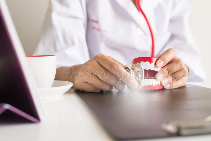 Il dentista che per mezzo dello stetoscopio diagnostica i modelli di plastica dei denti, concetto di controllo dentario immagini stock