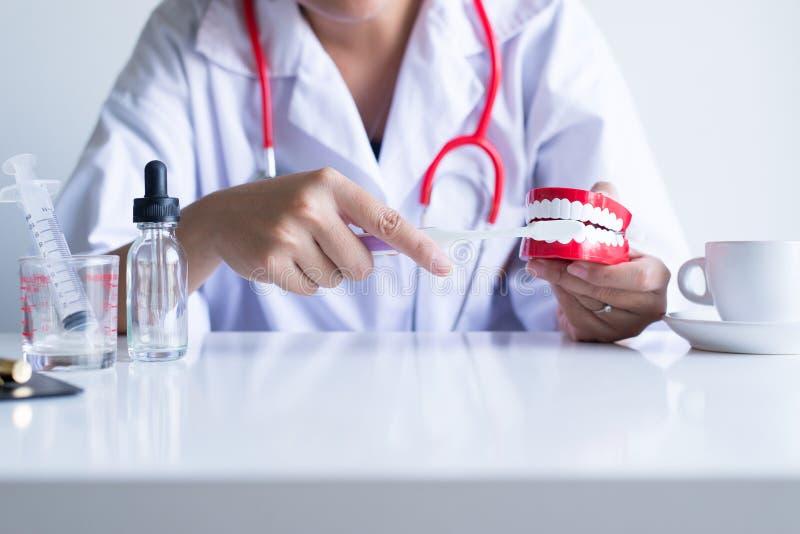 Il dentista diagnostica i modelli di plastica con lo spazzolino da denti, concetto dei denti di controllo dentario fotografia stock
