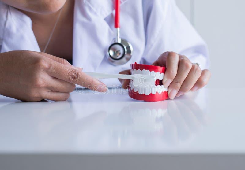 Il dentista diagnostica i modelli di plastica con lo spazzolino da denti, concetto dei denti di controllo dentario immagine stock libera da diritti