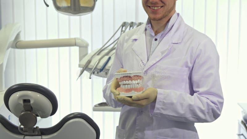Il dentista mostra la disposizione dei denti umani all'ufficio immagini stock libere da diritti