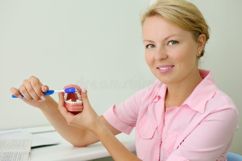 Il dentista sorridente mostra come pulire correttamente i denti immagine stock libera da diritti