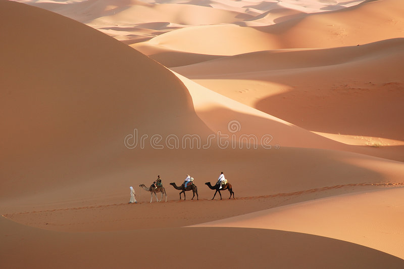 Il deserto fotografia stock libera da diritti