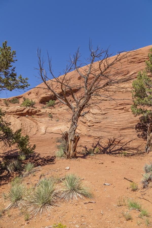 Il deserto della pietra dell'Arizona fotografia stock libera da diritti