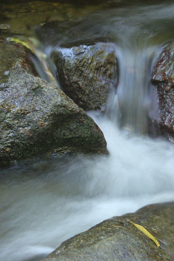 Il dettaglio affascinante dell'acqua scorre nel parco nazionale unico di EL Avila a Caracas, Venezuela immagini stock