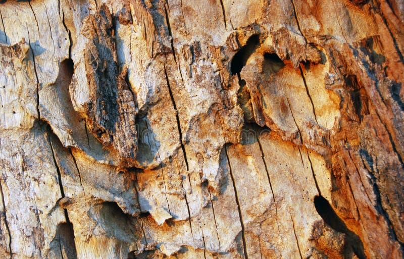 Il dettaglio della liscivia del alinac dell'alberodi corteccia Å fotografie stock libere da diritti