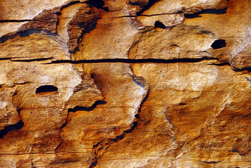 Il dettaglio della liscivia del alinac dell'alberodi corteccia Å fotografia stock libera da diritti