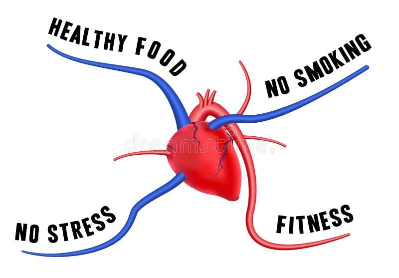 Un cuore sano illustrazione di stock