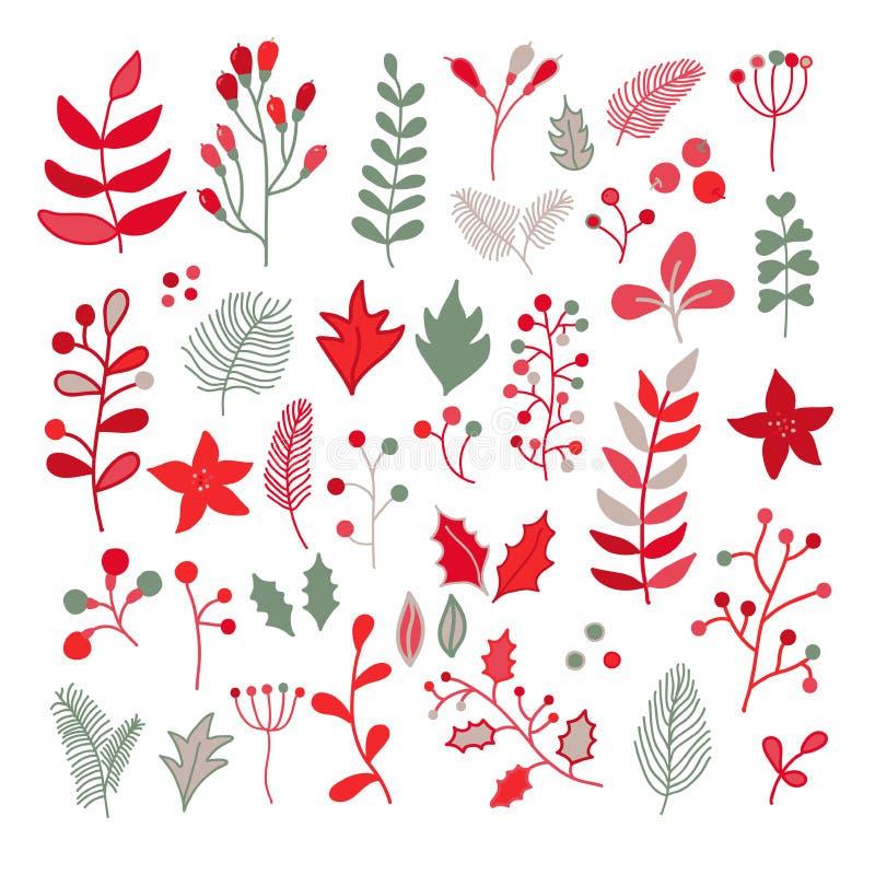 Il disegno floreale di vettore di Natale ha messo con agrifoglio, la stella di Natale, foschia illustrazione vettoriale