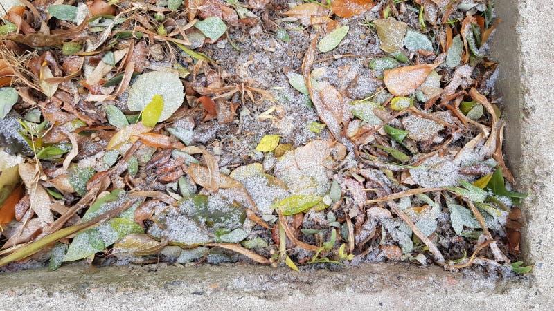 Il disordine delle foglie di autunno e dell'erba asciutta in cemento ha orlato l'aiola immagini stock libere da diritti