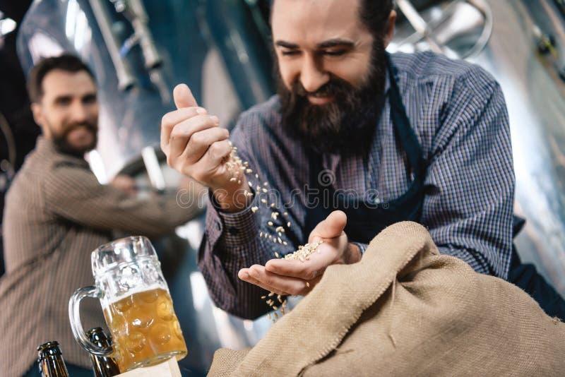 Il fabbricante di birra barbuto allegro vaglia attraverso il grano della mano per fare nel mestiere della fabbrica di birra del m fotografia stock libera da diritti