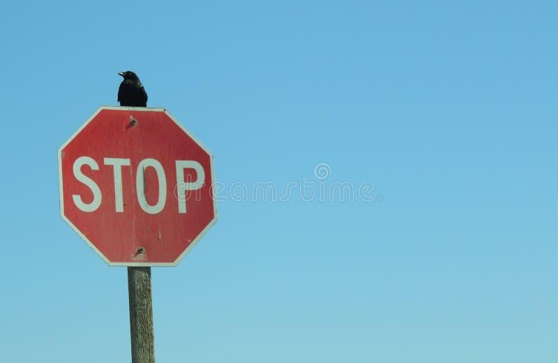 Il fanale di arresto con il corvo fotografie stock