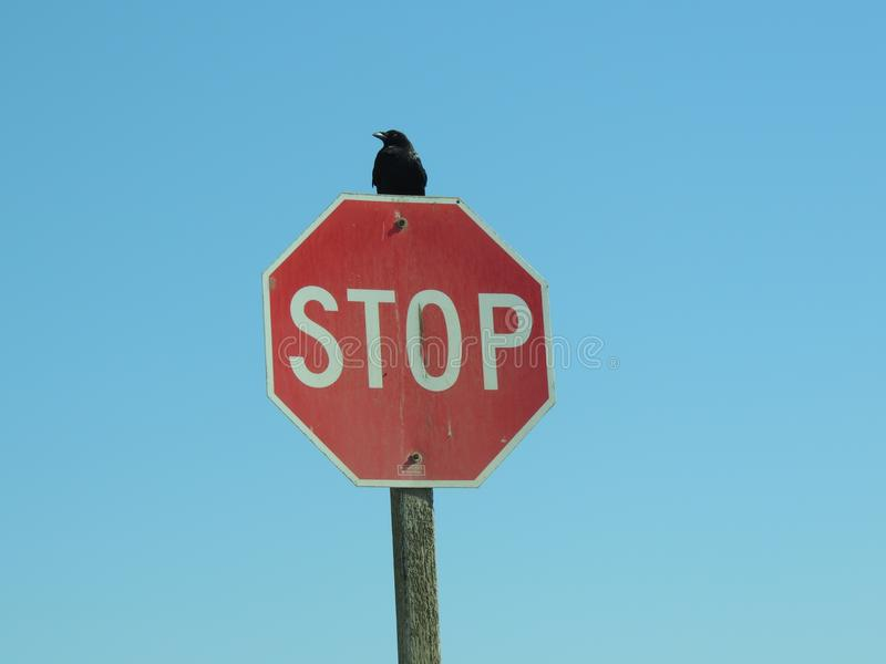 Il fanale di arresto con il corvo sulla cima fotografia stock libera da diritti