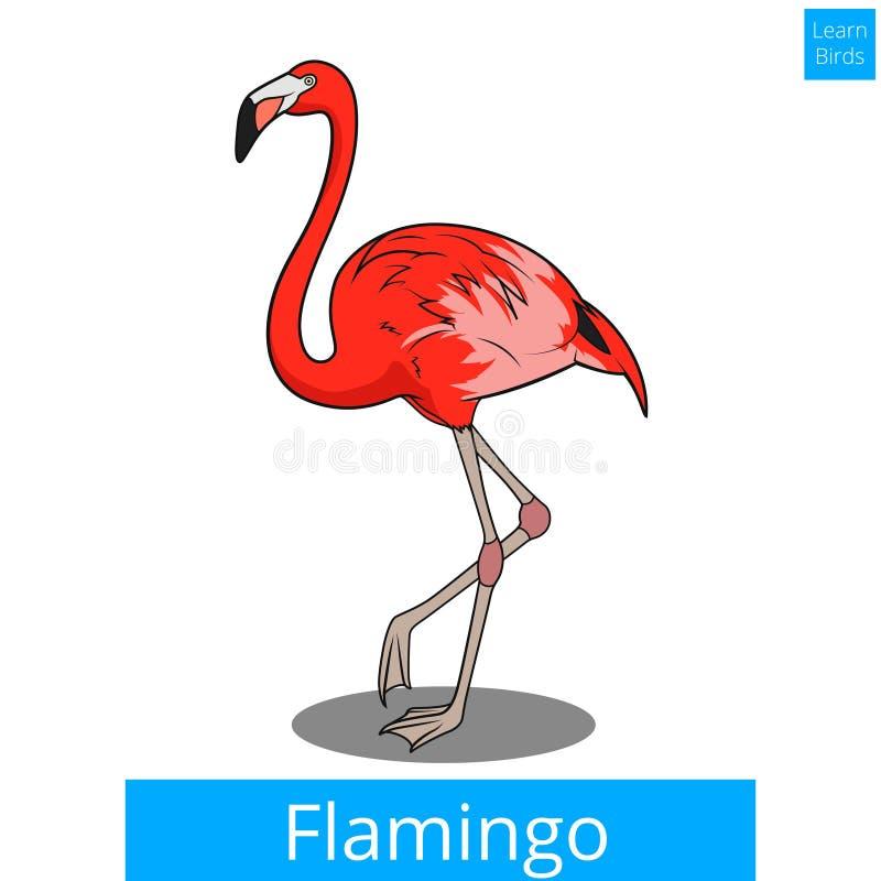 Il fenicottero impara il vettore educativo del gioco degli uccelli illustrazione di stock