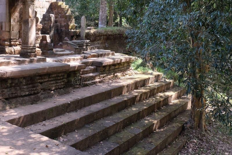 Il ficus si sviluppa sulle scale di un tempio dilapidato antico Rovine antiche ai punti della pietra della foresta pluviale di co fotografie stock