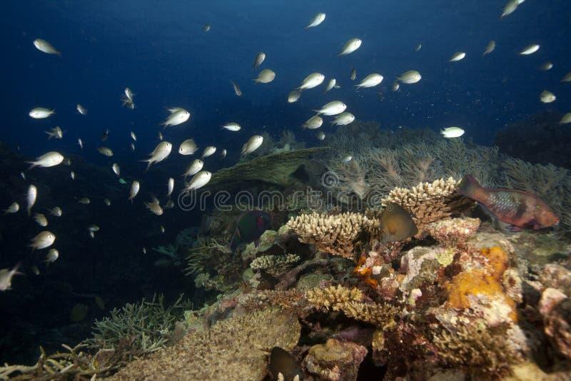 Il Fiji subacqueo fotografia stock libera da diritti