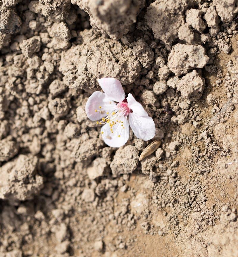 Il fiore è caduto da un albero sulla terra fotografia stock