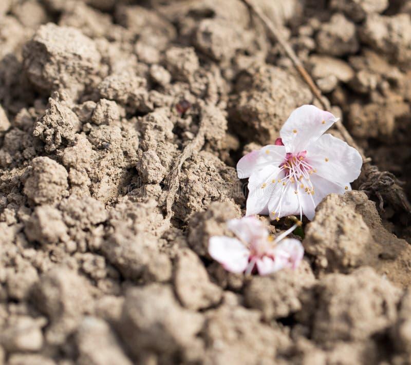 Il fiore è caduto da un albero sulla terra fotografia stock libera da diritti