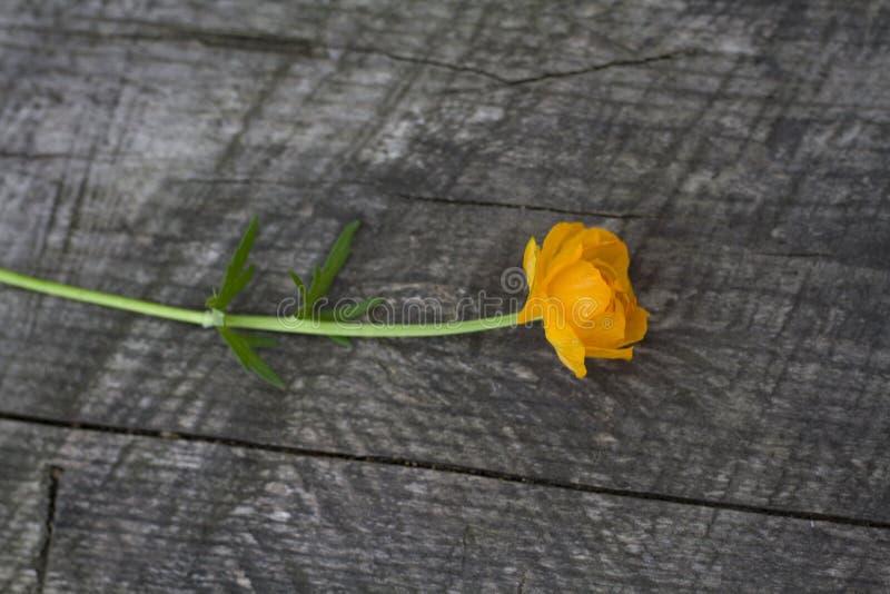 Il fiore arancio dell'estate si trova su un fondo grigio di vecchio legno immagini stock