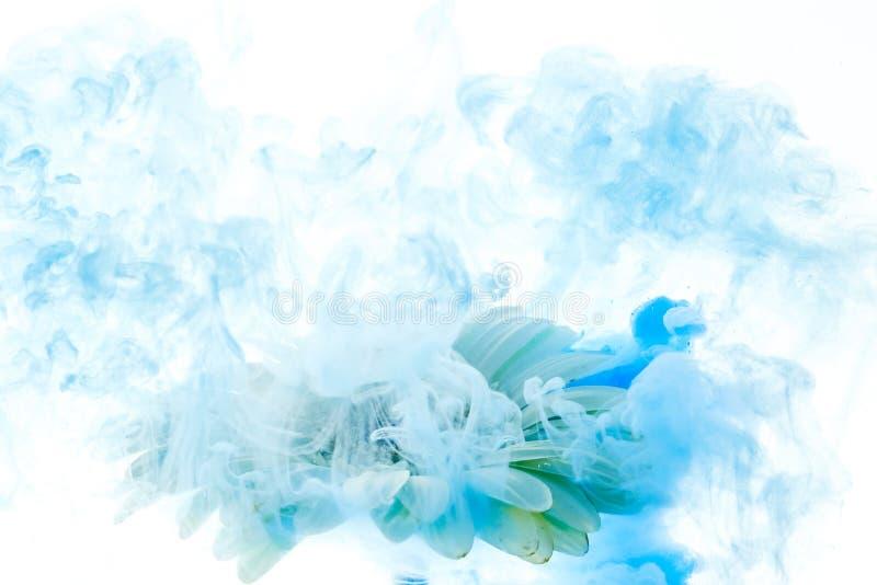 Il fiore blu luminoso con spruzza isolato su fondo bianco immagine stock