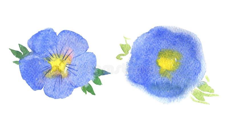 Il fiore del lino, il fiore blu, acquerello ha isolato il fondo, illustrazione dell'acquerello illustrazione di stock