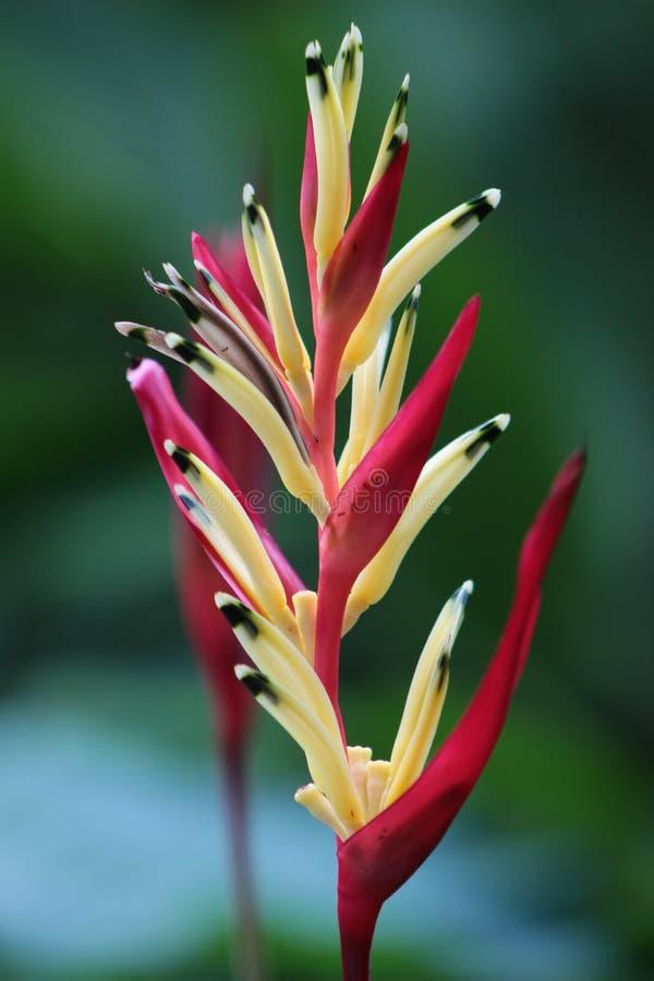 Il fiore dell'uccello di amore fotografie stock