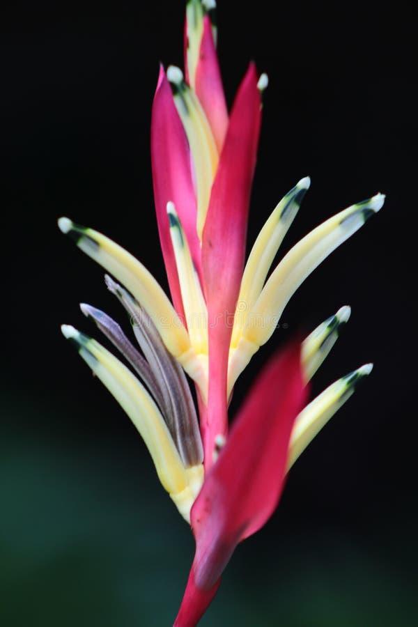 Il fiore dell'uccello di amore immagini stock libere da diritti