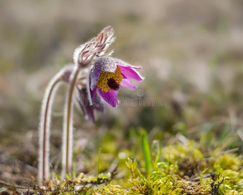 Il fiore della primavera immagini stock