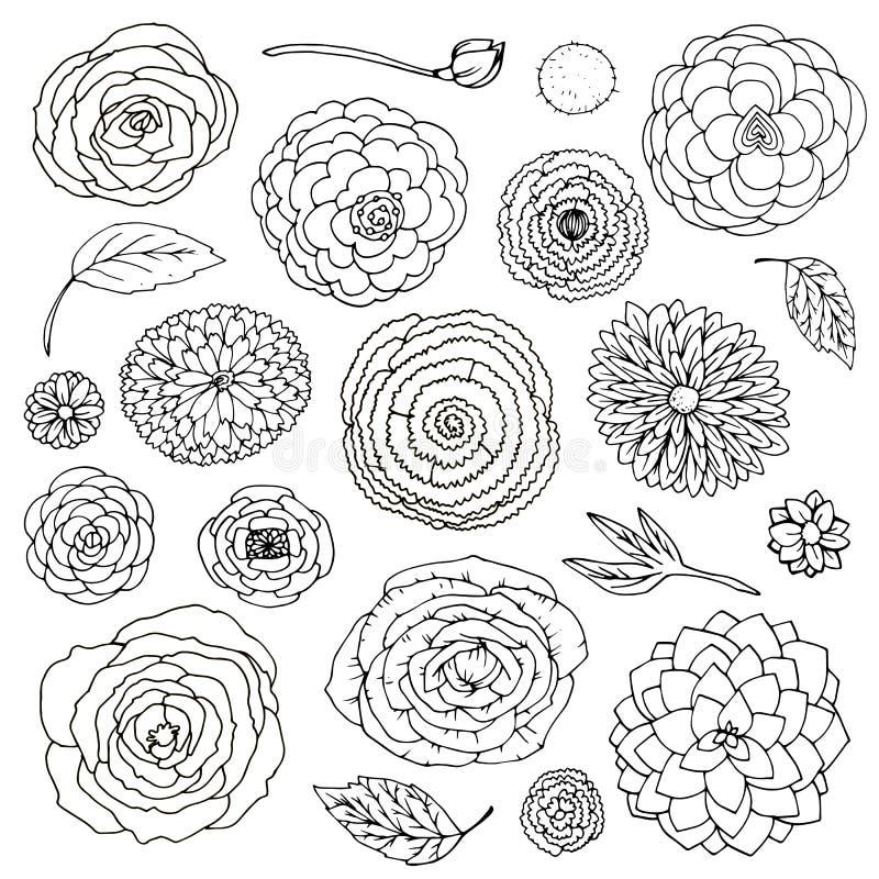 Il fiore di fantasia dell'illustrazione di vettore scarabocchia l'insieme in bianco e nero Elementi isolati su fondo bianco illustrazione vettoriale